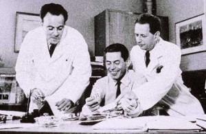 F. Jacob, J. Monod et A. Lwoff. Prix nobel de médecine 1965.